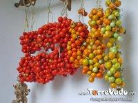 i-pomodori-di-papa-2cp