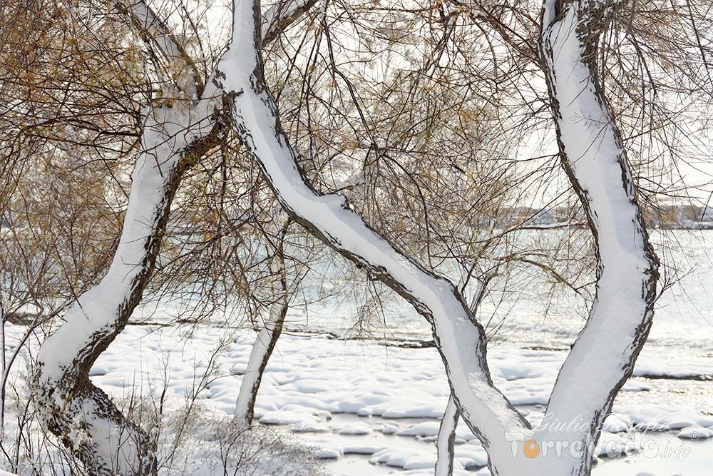 alberi imbiancati salento