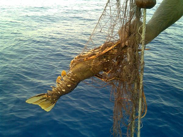 Pesca Alla Traina Pesca a Traina e Bolentino